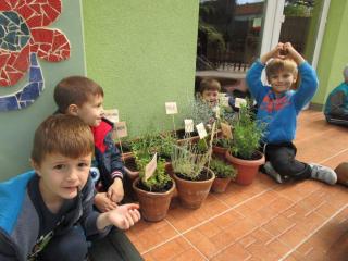 Sadnja začinskog i ljekovitog bilja